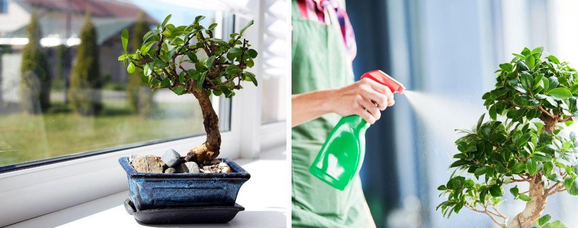 Hoe Verzorg Ik Een Bonsai Boompje Groencentrum Inspiratie Voor Uw Tuin
