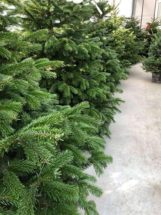 Kerstbomen Groencentrum Inspiratie Voor Uw Tuin